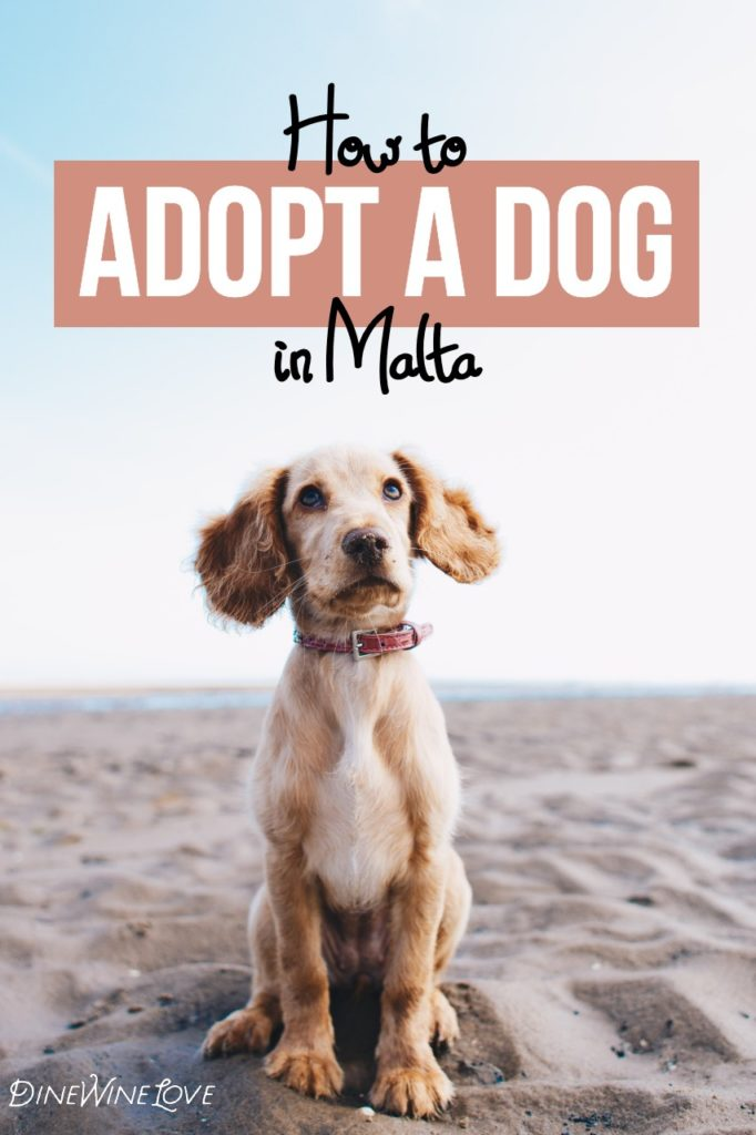 How to Adopt a Dog in Malta