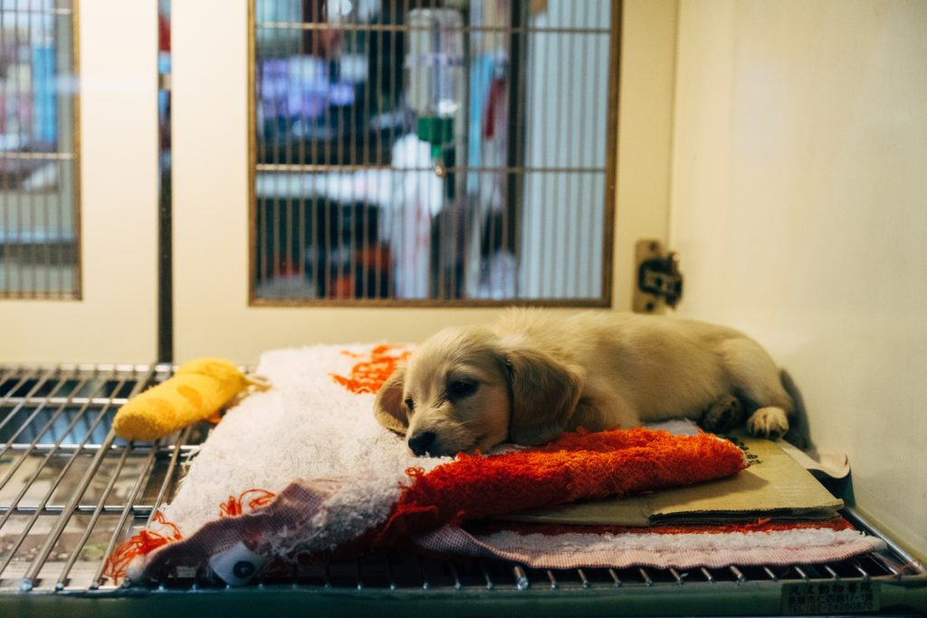 Puppy in a Malta shelter