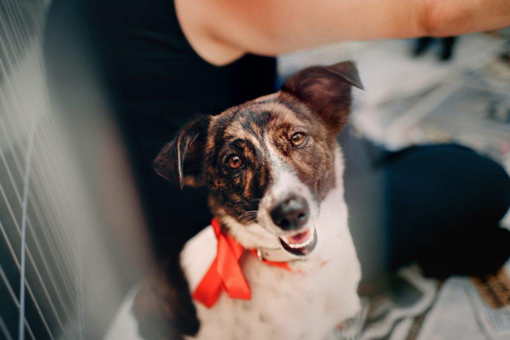 Dog in a Malta shelter