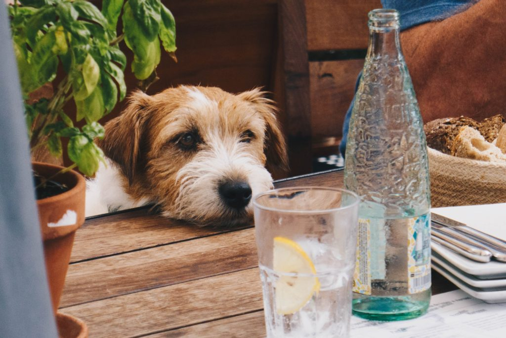 Dog at restaurant