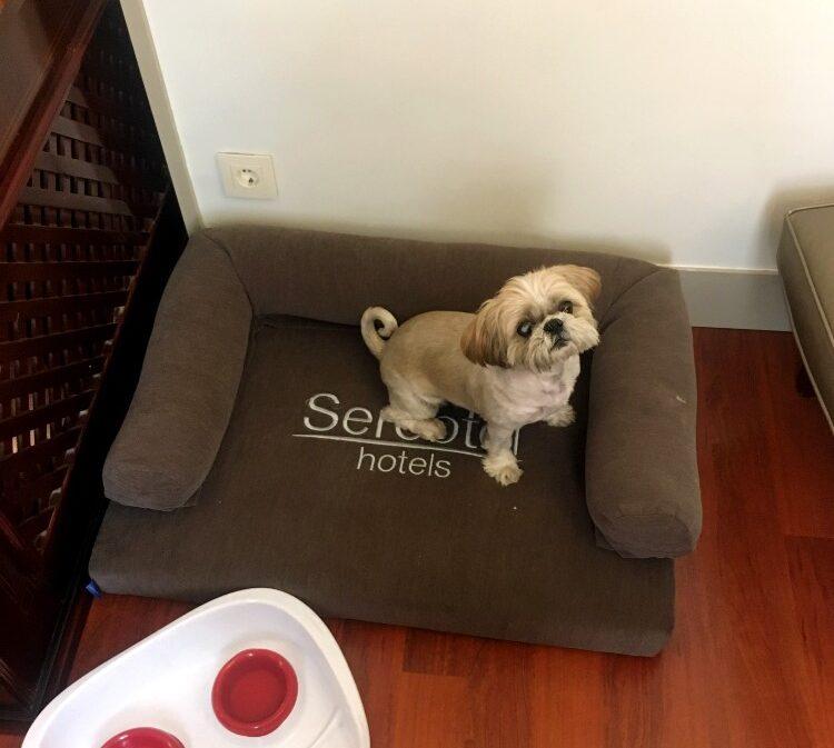 Sercotel Gran Hotel Conde Duque Review - dog-friendly hotel